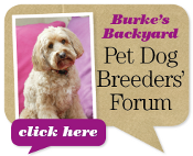 Pet Dog Breeders Forum