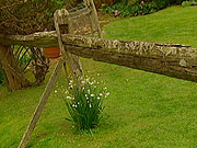 Fernbrook Garden