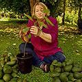 avocado2_5