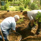 132003-Fruit-trees01