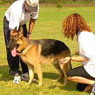202003_top_dogs04
