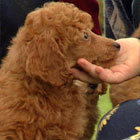 202003_top_dogs08