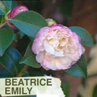 beatriceemily