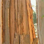 Tension Splits on Gum Tree