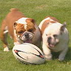 British Bulldogs playing football