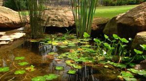 building a frog pond burke s backyard