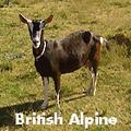 britishalpine_27