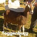 toggenburg_27