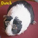 dutchcavy_3