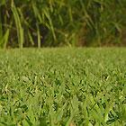 Fertilising the Lawn