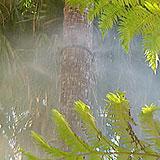 Palm Irrigation