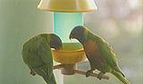 birdfeeder_15