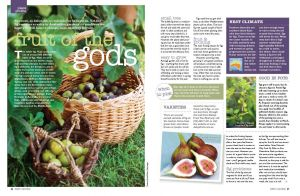Figs Recipes