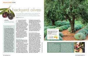 Growing backyard olives