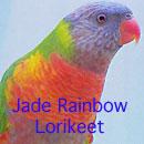 Jade Rainbow Lorikeet