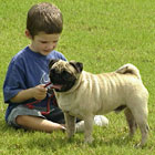 Pug Dog with Child