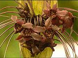batplants4_40