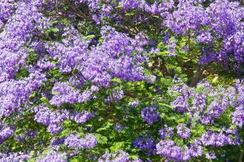Perfumed Plants