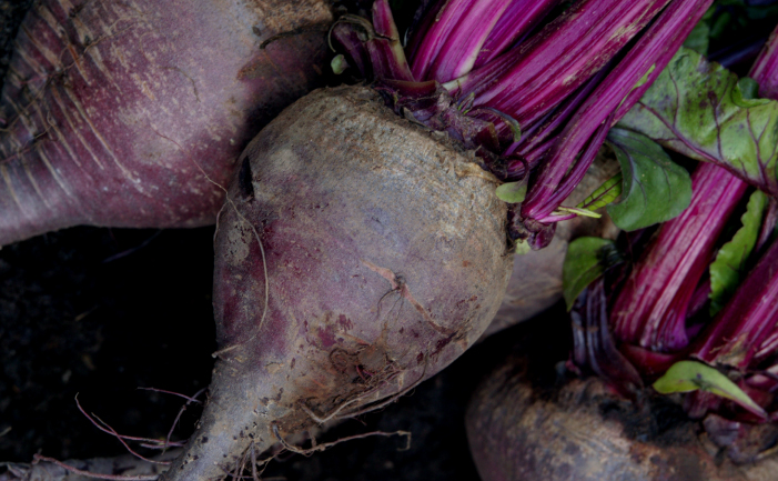 Beautiful Beetroot