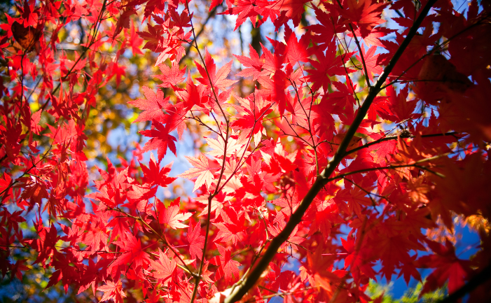 Best Autumn Trees and Plants