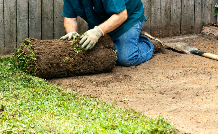 lawn maintenance turf