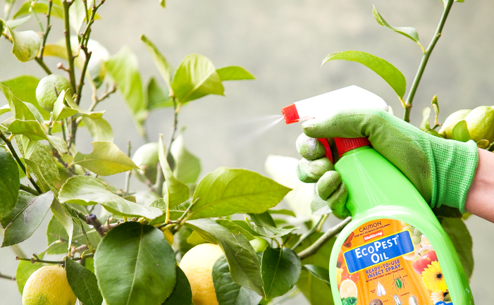 non-chemical pest spray