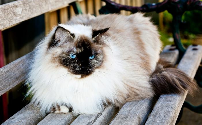 Backyard Garden Fruits : Ragdoll cats burke s backyard