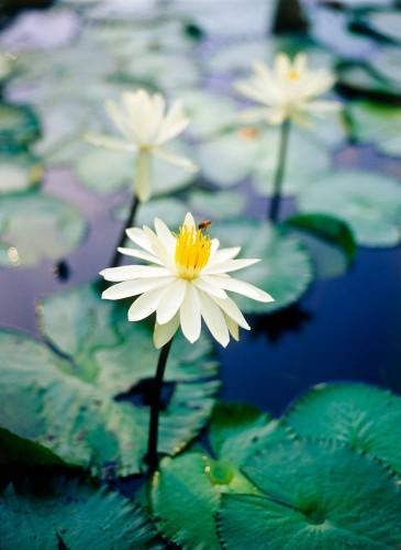Don's Tips: Ponds
