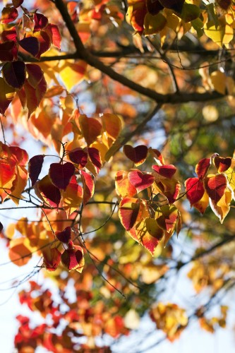 Don's Tips: Autumn Colour & Seasonal Stuff
