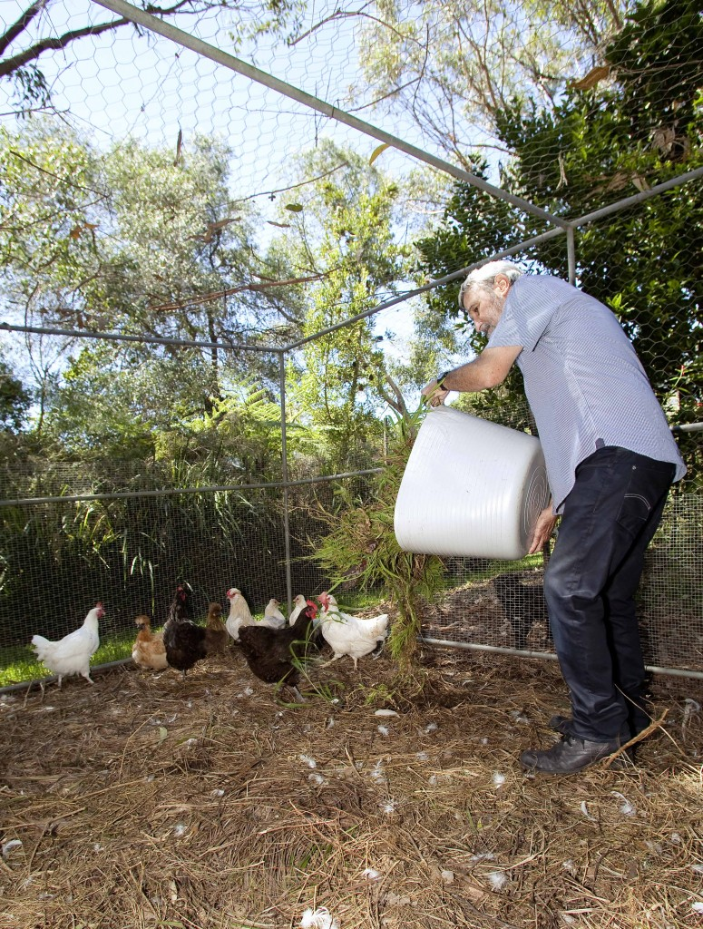 Don's Tips: Backyard Farm – Chooks