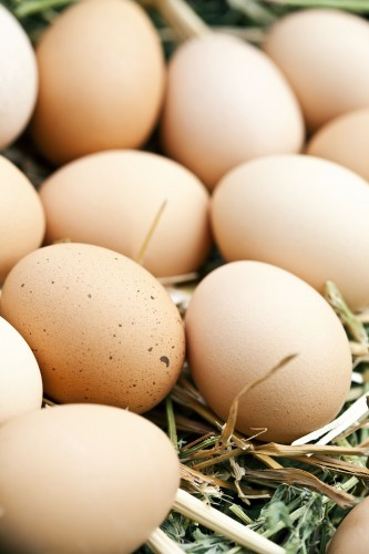 Don's Tips: Chooks & Eggs