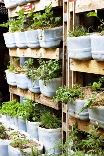 Don's Tips: Vertical Gardens