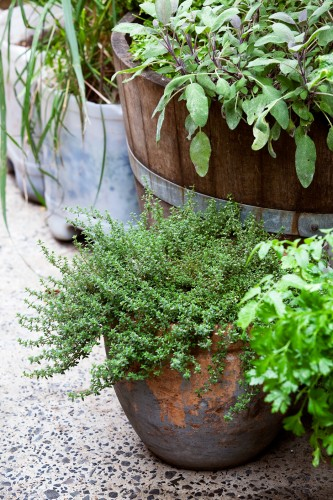 Don's Tips: Plants That Need Water In Winter