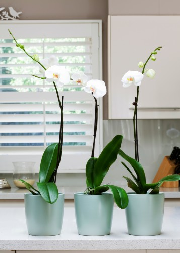Don's Tips: Orchids