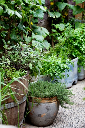 Don's Tips: Herbs In Pots