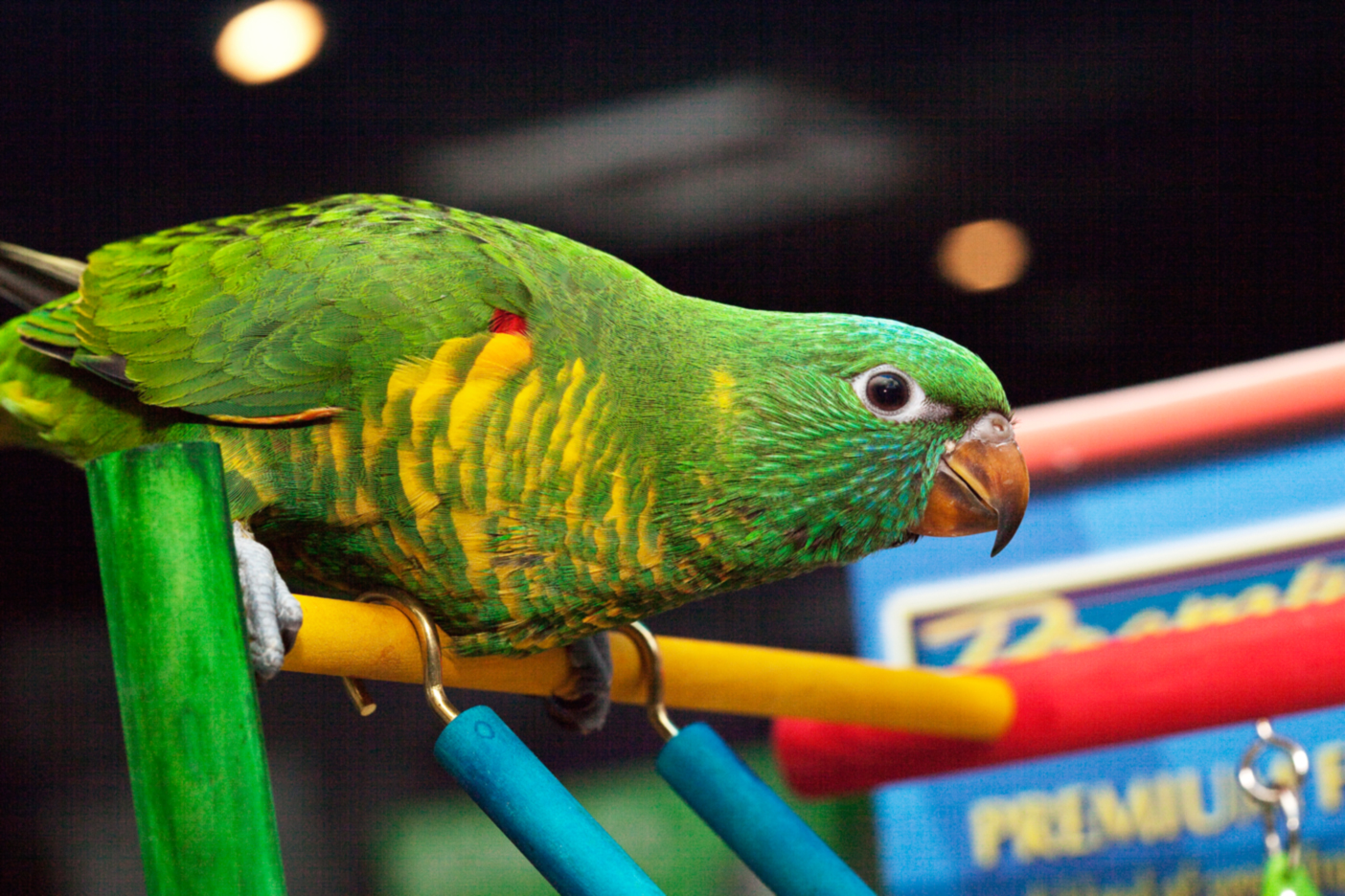 Problem Bird