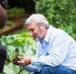 Don's Expert Answers:  Fungi/toadstools growing in my herb pots – are my herbs still ok to eat? What should i do?