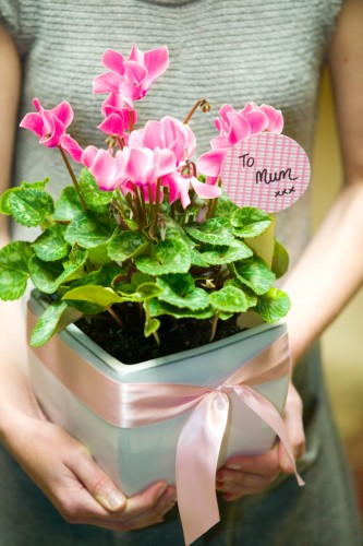 Don's Tips: Cyclamen