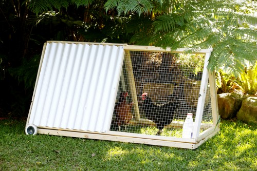 Chicken Coops for Small Spaces