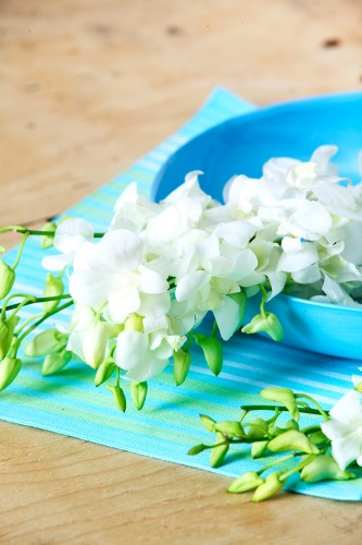 Don's Tips: Orchids In The Bathroom