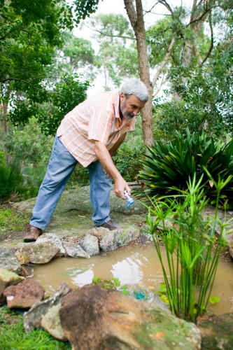 Don's Tips: Frog Ponds