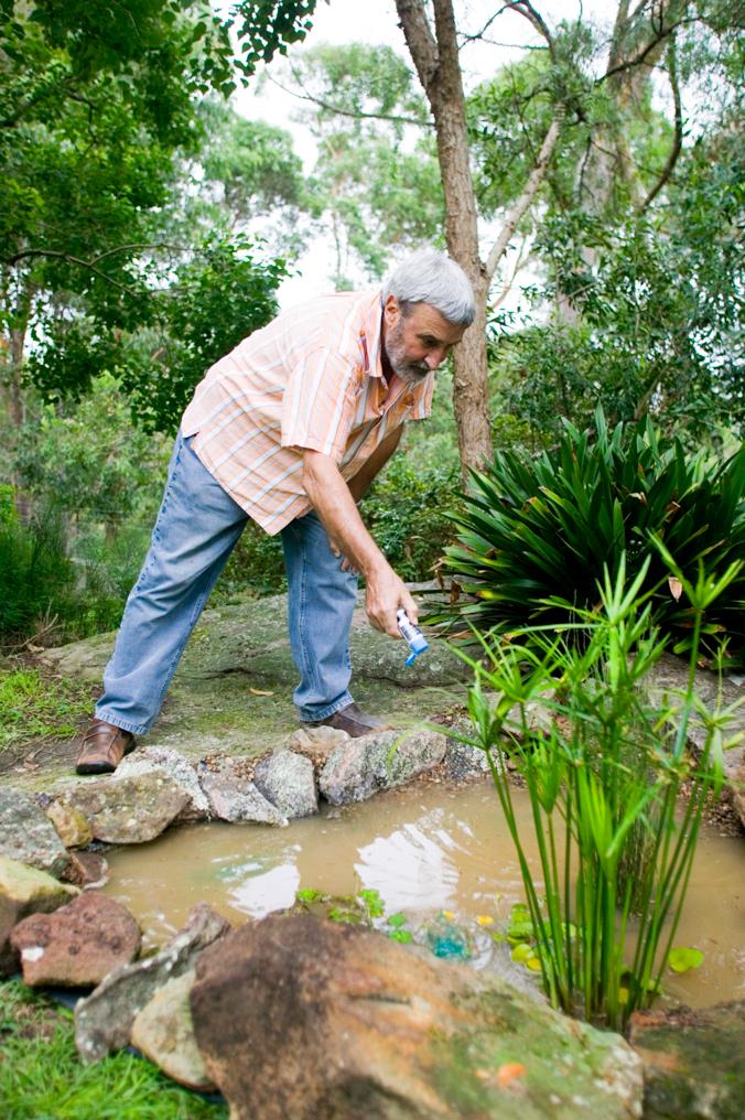 don s tips frog ponds burke s backyard