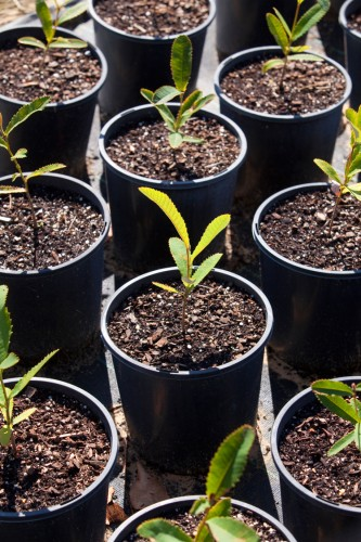 Don's Tips: Plant Survival