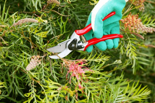 Don's Tips: Pruning