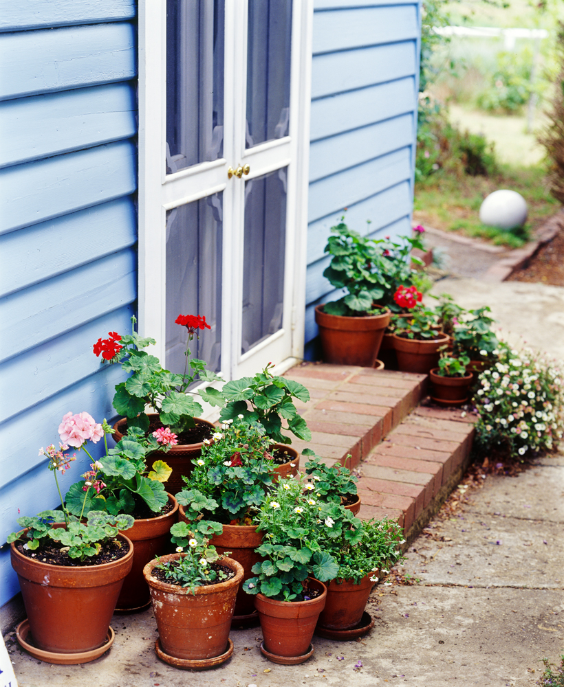 Don's Tips – Front Door Plants