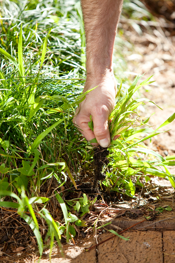 Don's Tips: Weeds