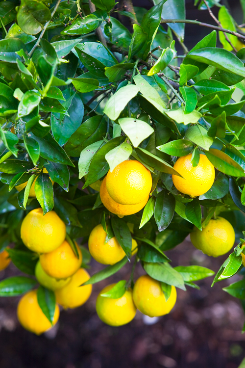 Don's Tips: How To Get Your Plants To Produce Fruit and Flowers