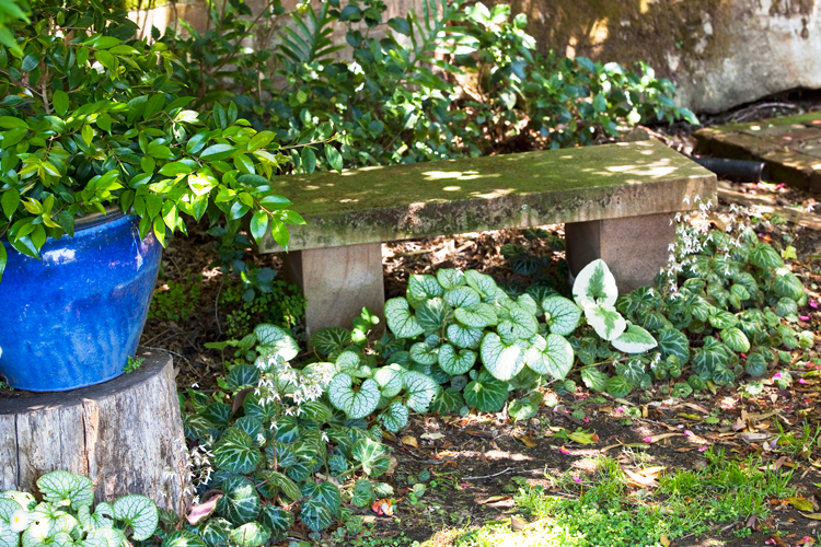 Don's Tips: Small Garden Makeovers