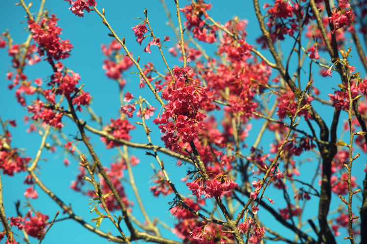 Don's Tips: Weather Affects Flowering Times