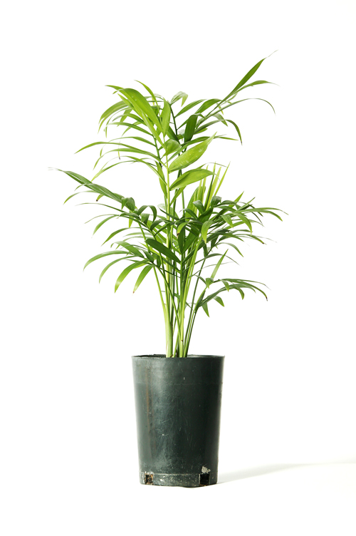 Don's Tips – The Cheapest Plants Ever